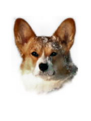 Welsh Corgis Pembroke vom Old Tom